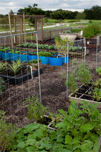 Raised beds, vegetable garden
