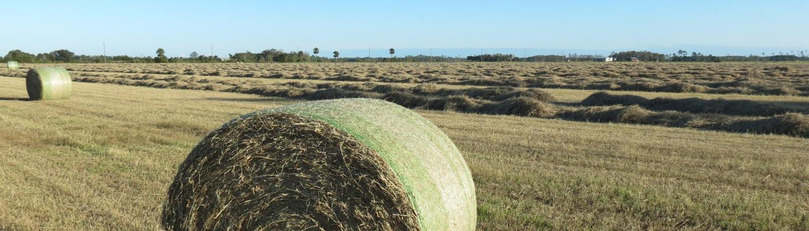 round hay bales in a field