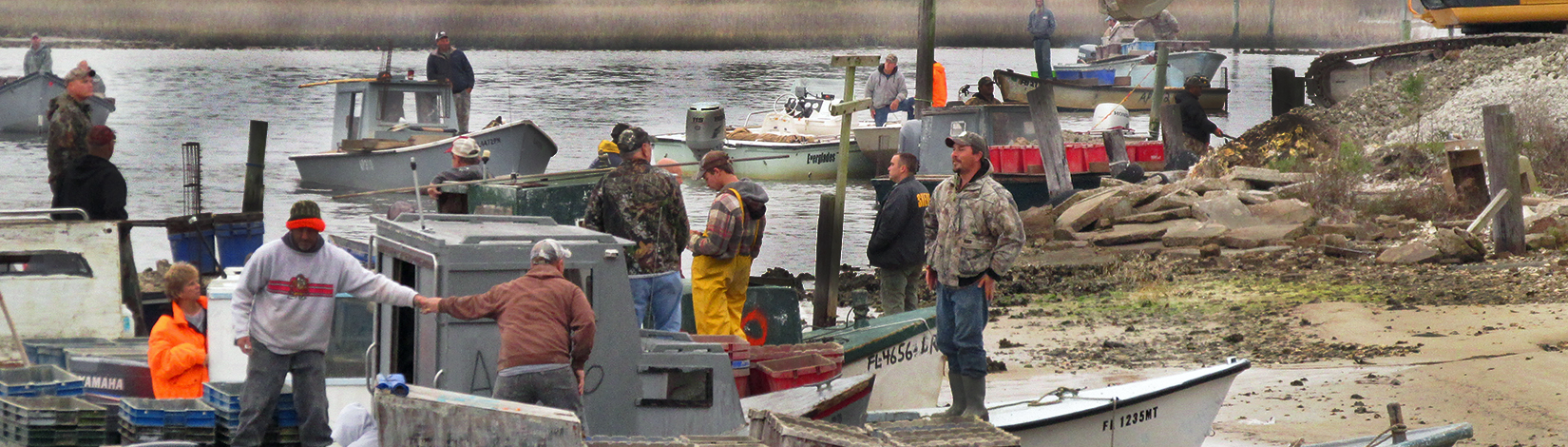 Oystermen in the bay oyster restoration