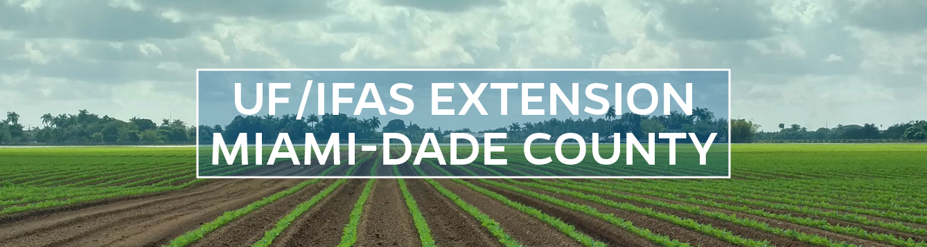 UF/IFAS Extension Miami-Dade County Logo
