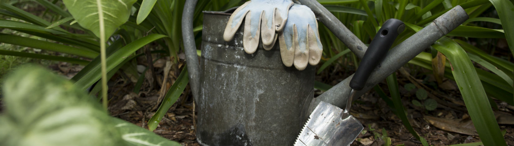 A watering can with gloves and a trowel, set against a vegetated background.