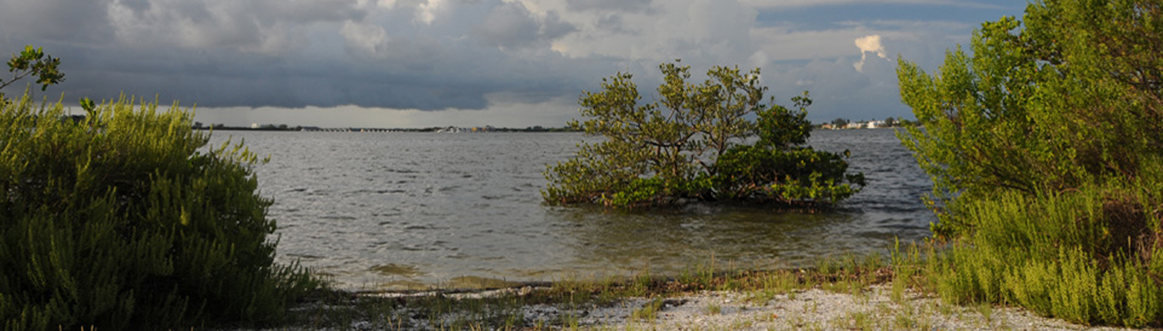 A coastal scene along Lemon Bay in Sarasota County, Florida.