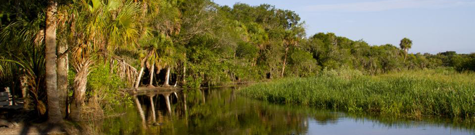 The Myakka River gently flows as it meanders through Myakka River State Park.