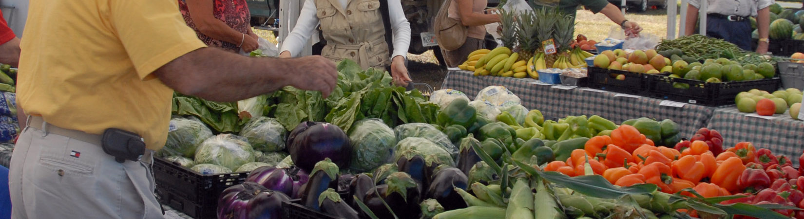 Patrons pick through piles of produce at the Phillippi Farmhouse Market in Sarasota County