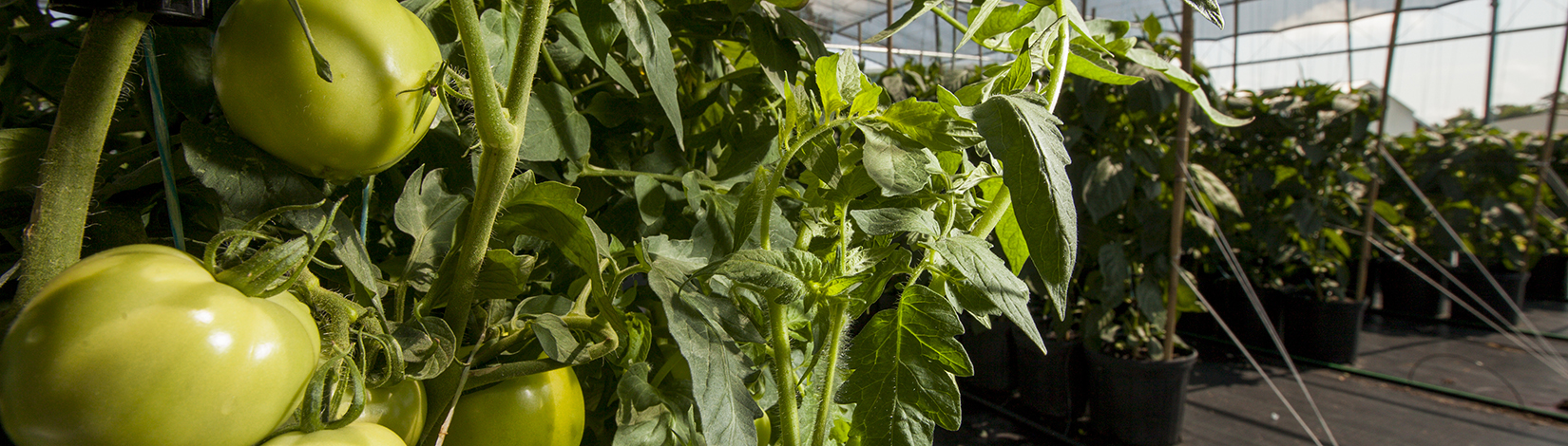 Nursery and Greenhouse-Production Systems - UF/IFAS Extension