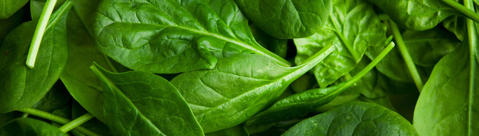 A close up photo of spinach.