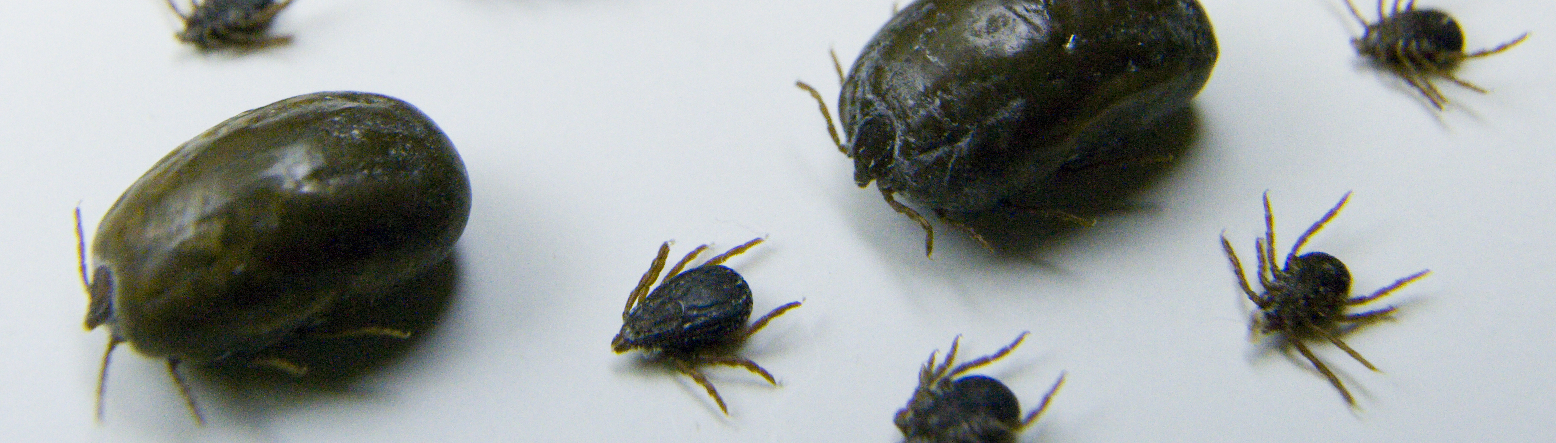 Ticks and Disease - UF/IFAS Extension
