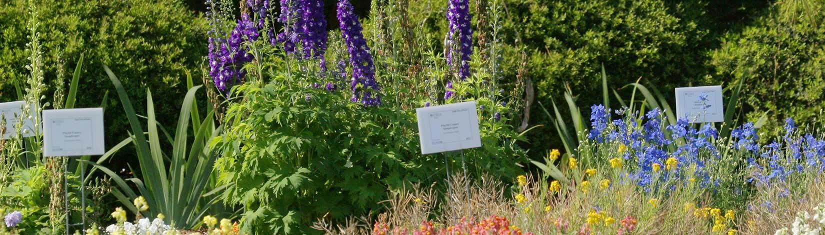Florida Gardening Calendar - UF/IFAS Extension