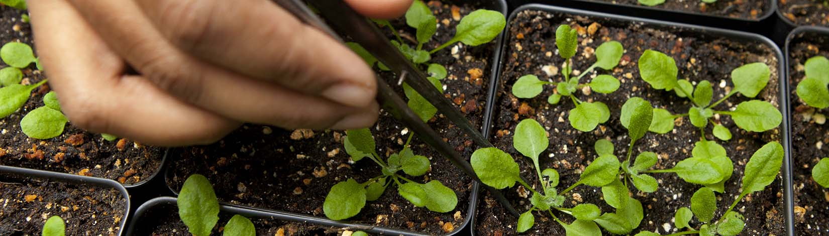 Using tweezers on plants while container gardening