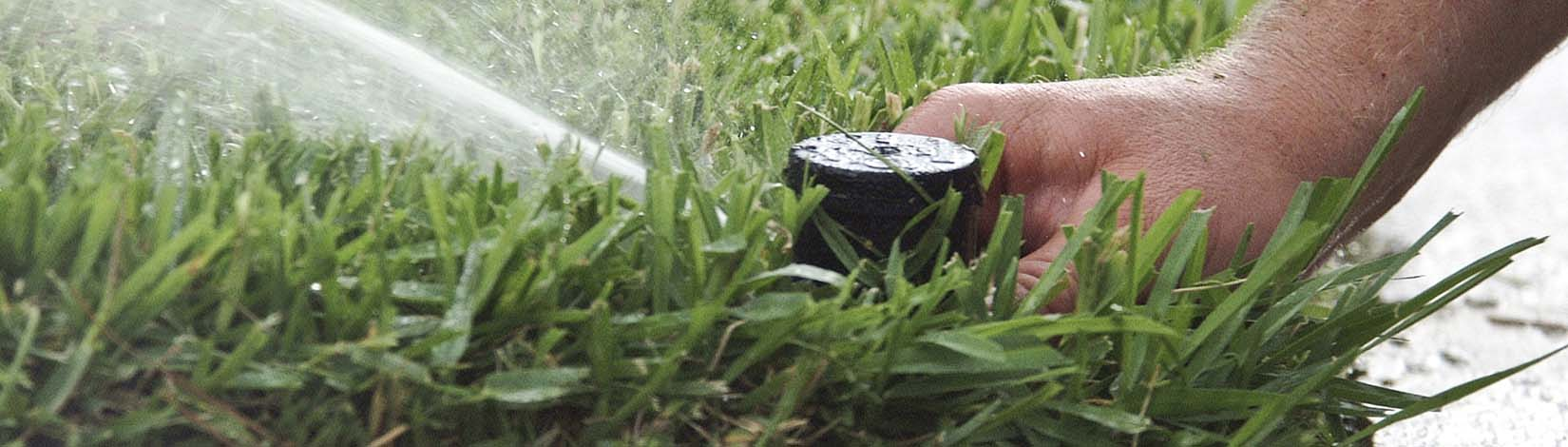 Sprinkler head shooting water for lawn irrigation