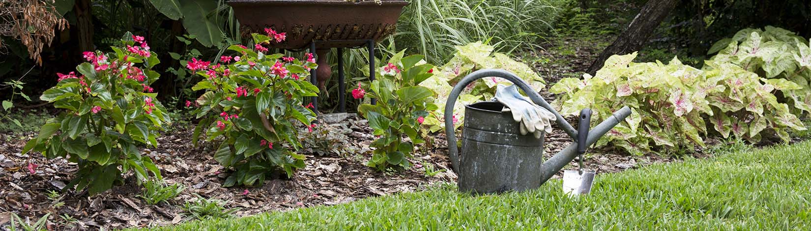 Watering container in a garden