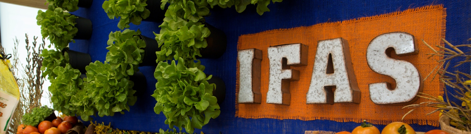UF/IFAS Banner over baskets of veggies