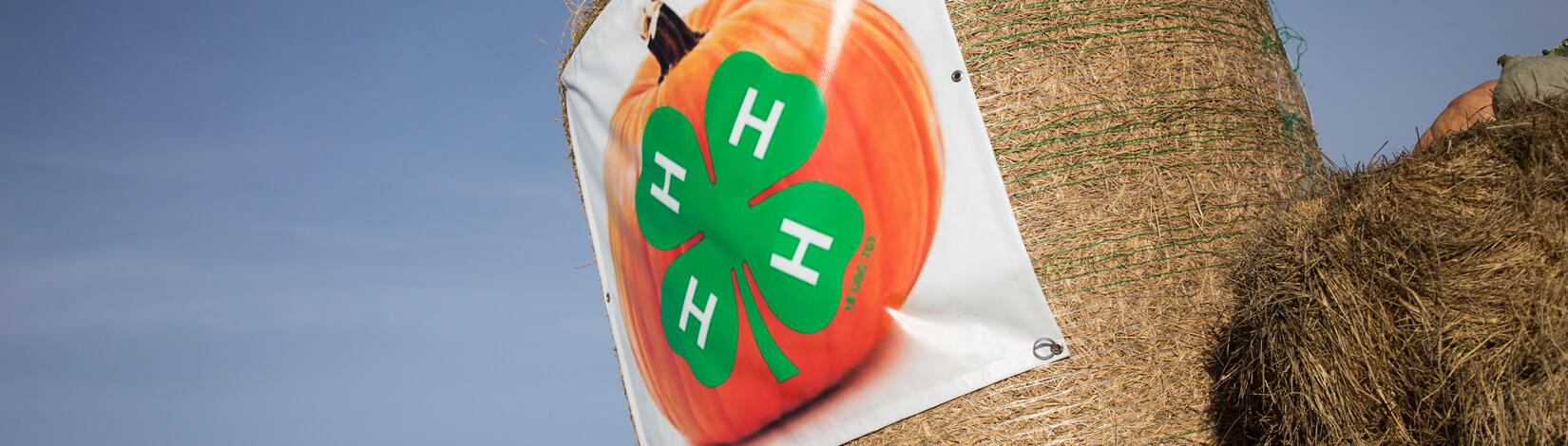 4-H logo on pumpkin